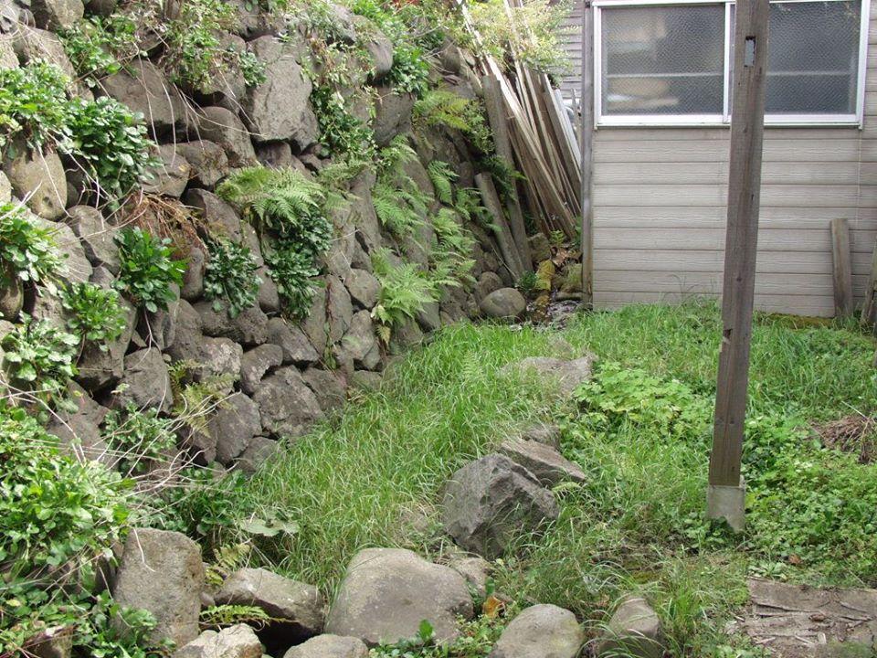 市内入船のニホンザリガニの生息地。石垣の下に湧水がたまり、ザリガニが暮らしている。