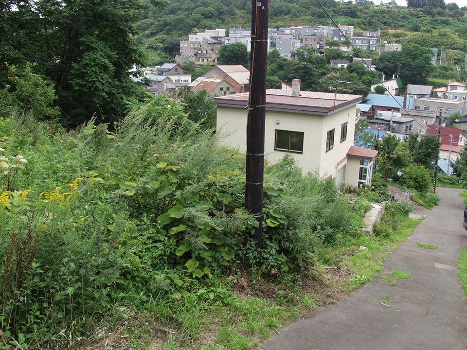 階段状に家並みが続く小樽市の住宅地。家々の間には林や草やぶが多い。近くにザリガニの生息地がある。