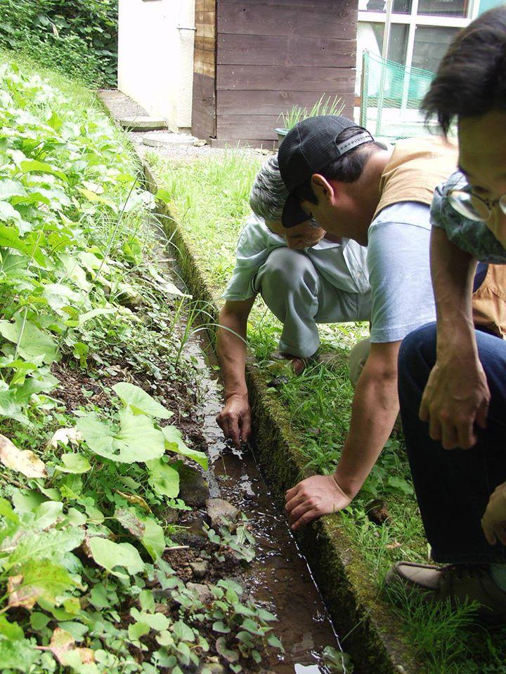 住宅地の中の生息地。側溝に冷たい湧水が流れ、ザリガニがすんでいる。