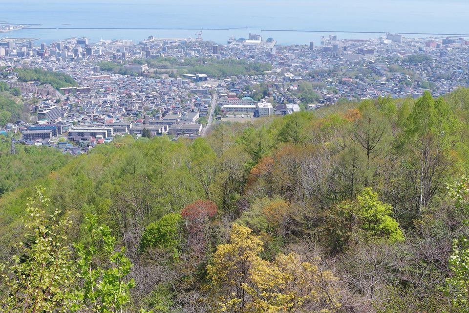 小樽の森は新緑の季節です。木々の芽吹きには紅色や黄色も混ざり、「春紅葉」と呼ばれます。