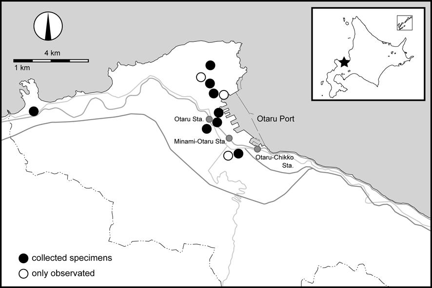調査によってツヤムネクラズミウマの生息が確認された地点。 他にも、港の周辺や住宅地に広く分布していると考えられます。